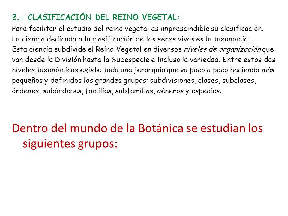 Dentro del mundo de la Botánica se estudian los siguientes grupos: