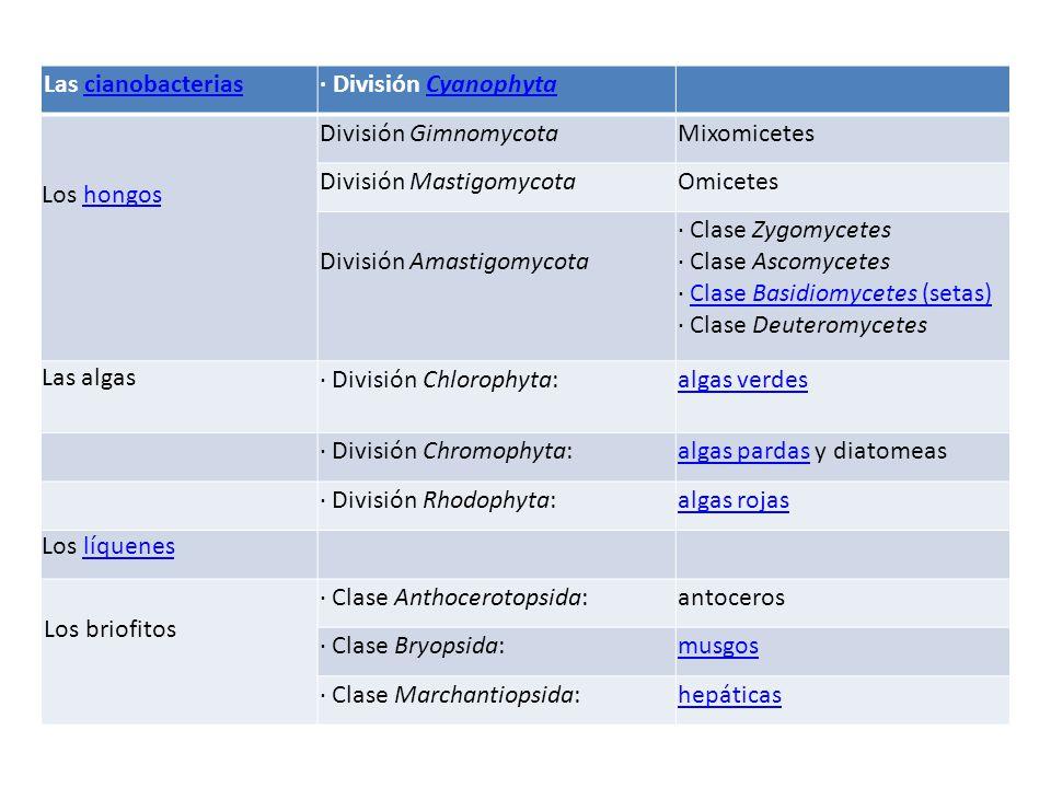 Las cianobacterias · División Cyanophyta. Los hongos. División Gimnomycota. Mixomicetes. División Mastigomycota.