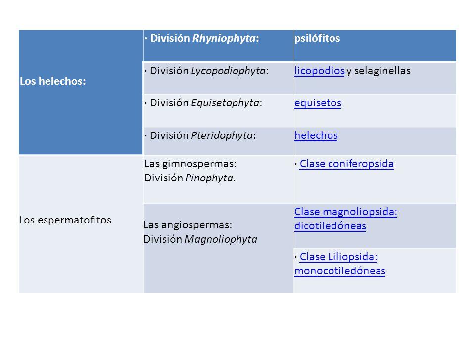 Los helechos: · División Rhyniophyta: psilófitos. · División Lycopodiophyta: licopodios y selaginellas.