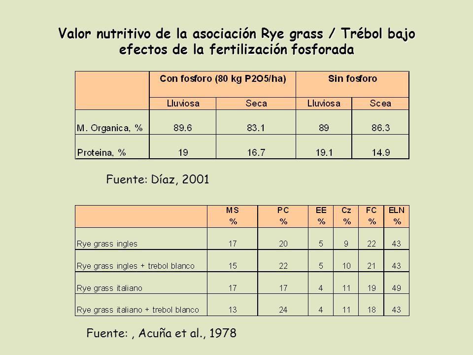Valor nutritivo de la asociación Rye grass / Trébol bajo efectos de la fertilización fosforada