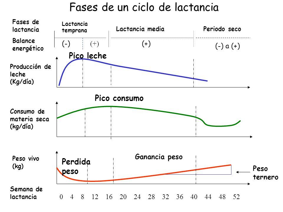 Fases de un ciclo de lactancia