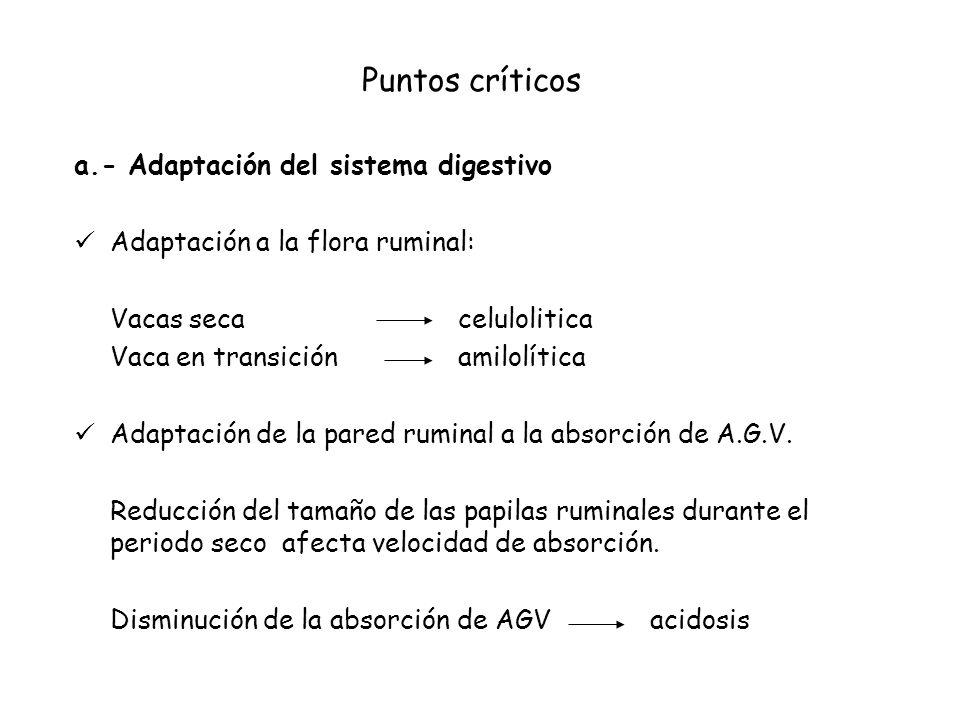 Puntos críticos a.- Adaptación del sistema digestivo