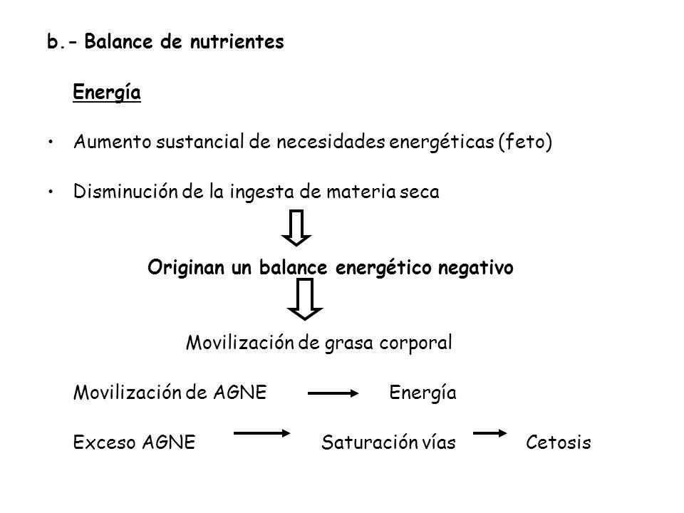 Originan un balance energético negativo