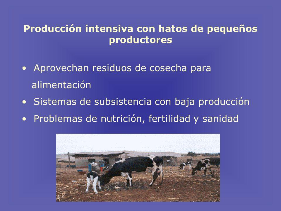 Producción intensiva con hatos de pequeños productores