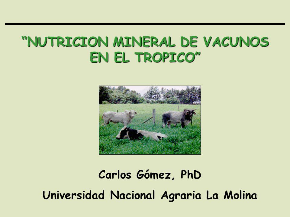 NUTRICION MINERAL DE VACUNOS EN EL TROPICO