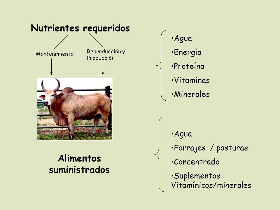 Nutrientes requeridos Alimentos suministrados