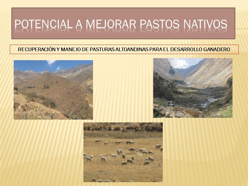 Potencial a Mejorar Pastos Nativos