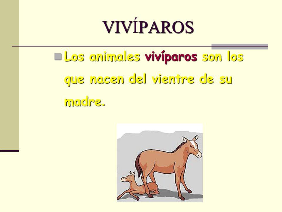 VIVÍPAROS Los animales vivíparos son los que nacen del vientre de su madre.