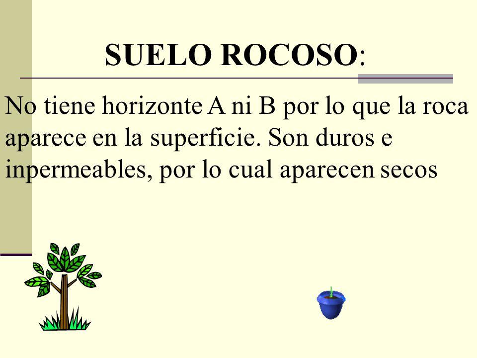 SUELO ROCOSO: No tiene horizonte A ni B por lo que la roca aparece en la superficie.