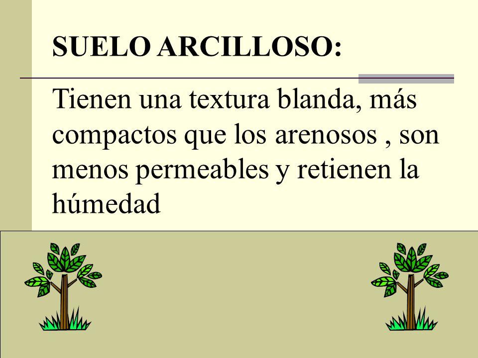SUELO ARCILLOSO: Tienen una textura blanda, más compactos que los arenosos , son menos permeables y retienen la húmedad.