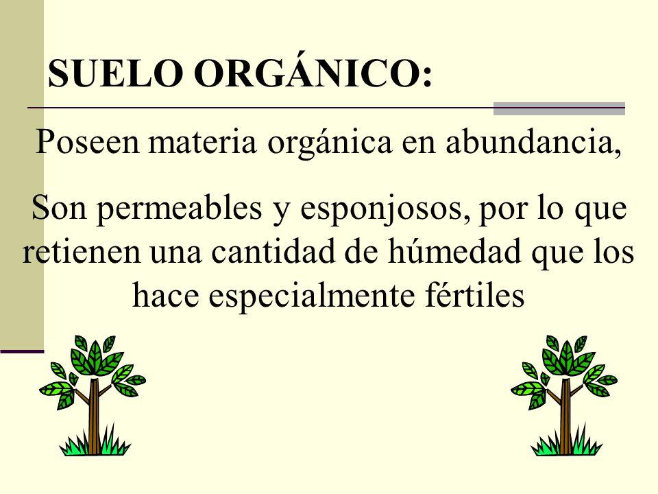 Poseen materia orgánica en abundancia,