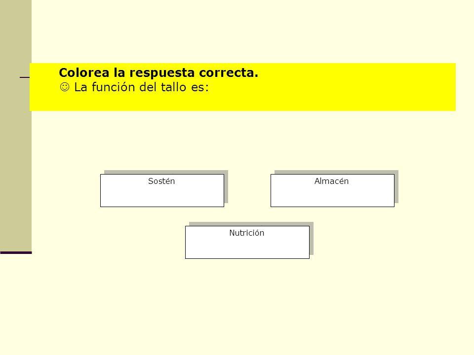 Colorea la respuesta correcta.  La función del tallo es: