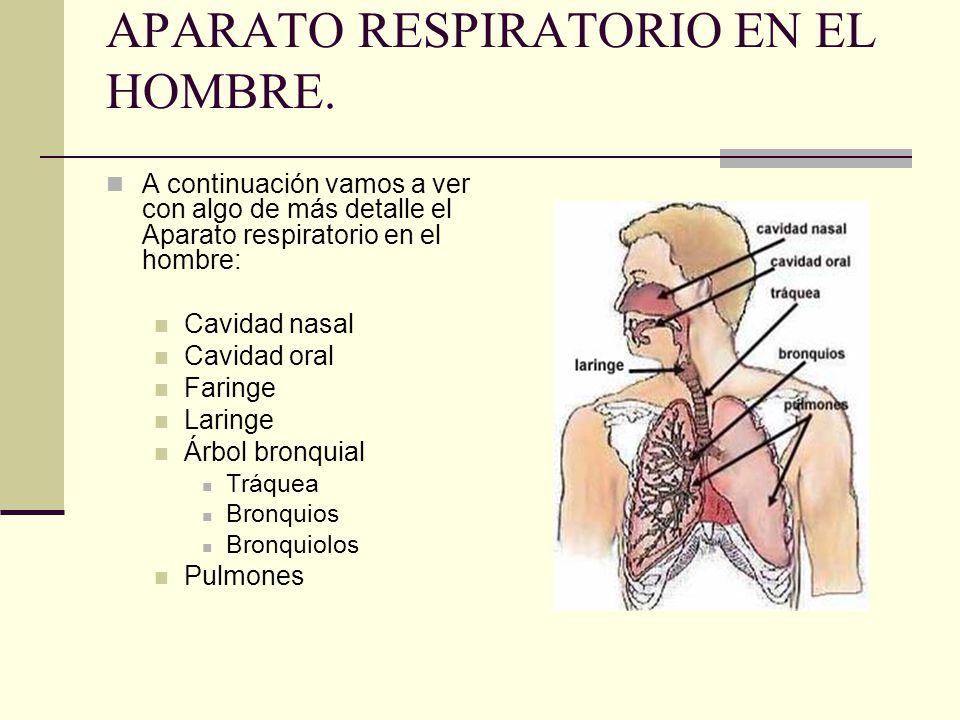 APARATO RESPIRATORIO EN EL HOMBRE.