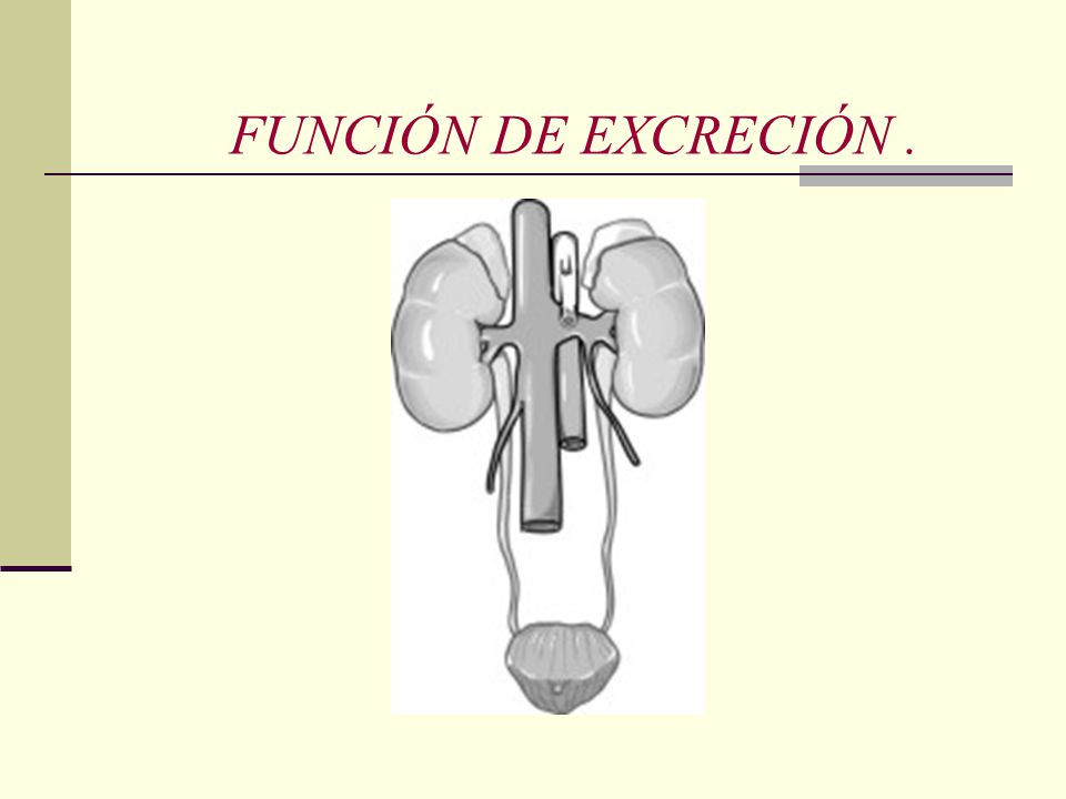 FUNCIÓN DE EXCRECIÓN .