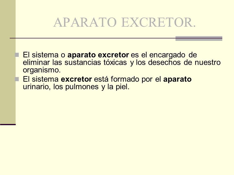 APARATO EXCRETOR. El sistema o aparato excretor es el encargado de eliminar las sustancias tóxicas y los desechos de nuestro organismo.