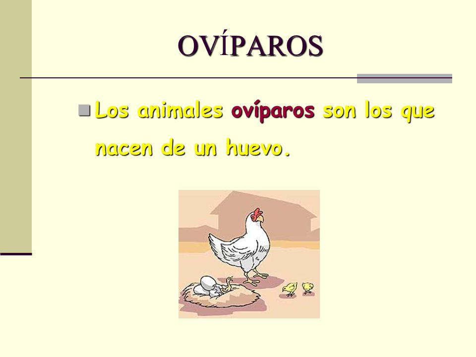 OVÍPAROS Los animales ovíparos son los que nacen de un huevo.