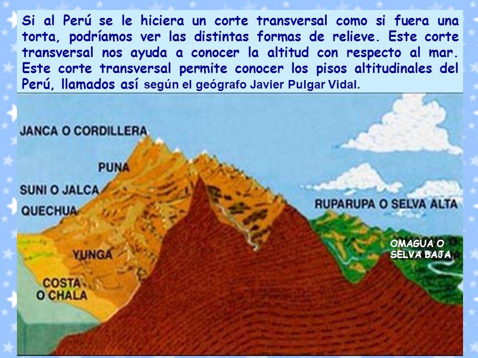 Si al Perú se le hiciera un corte transversal como si fuera una torta, podríamos ver las distintas formas de relieve. Este corte transversal nos ayuda a conocer la altitud con respecto al mar. Este corte transversal permite conocer los pisos altitudinales del Perú, llamados así según el geógrafo Javier Pulgar Vidal.