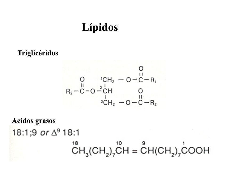 Lípidos Triglicéridos Acidos grasos