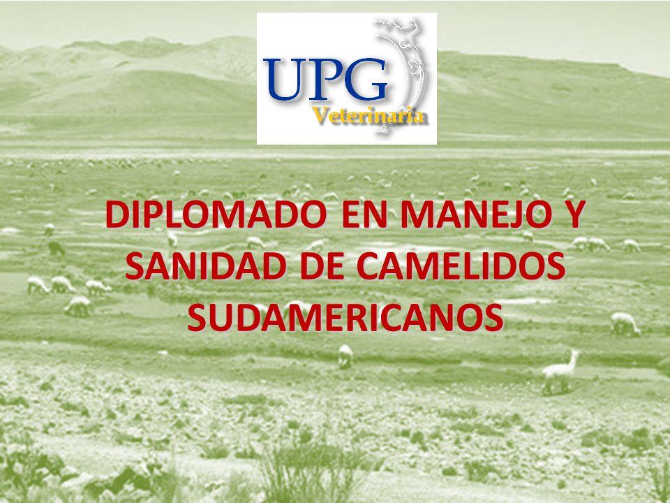 DIPLOMADO EN MANEJO Y SANIDAD DE CAMELIDOS SUDAMERICANOS