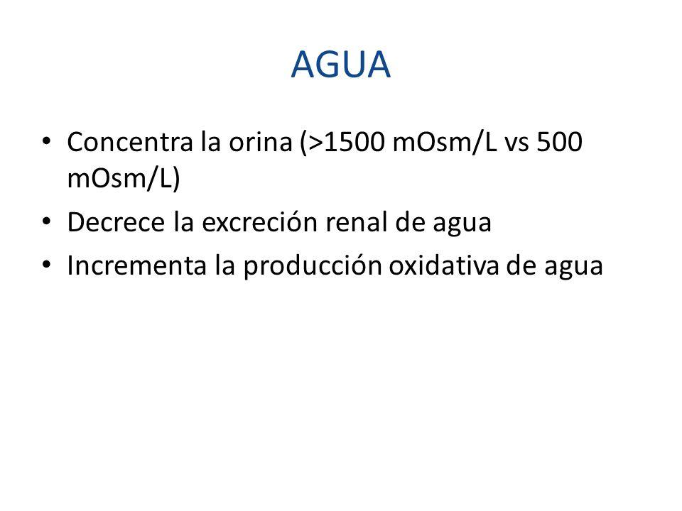AGUA Concentra la orina (>1500 mOsm/L vs 500 mOsm/L)