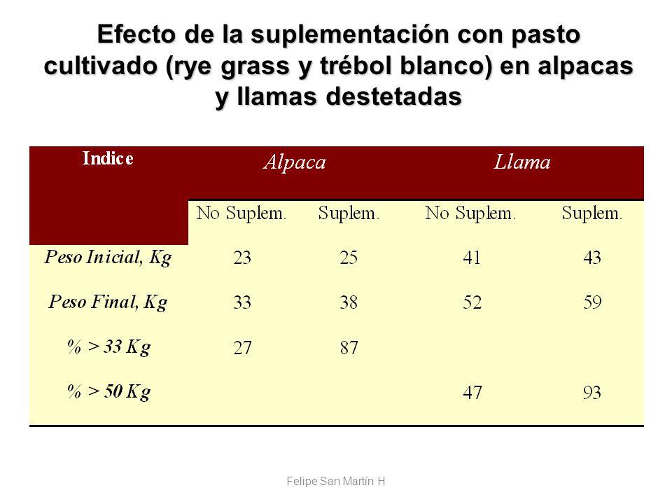 Efecto de la suplementación con pasto cultivado (rye grass y trébol blanco) en alpacas y llamas destetadas