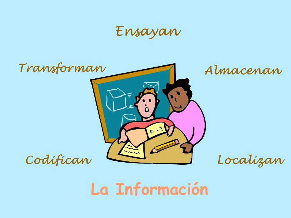 Ensayan Transforman Almacenan Codifican Localizan La Información