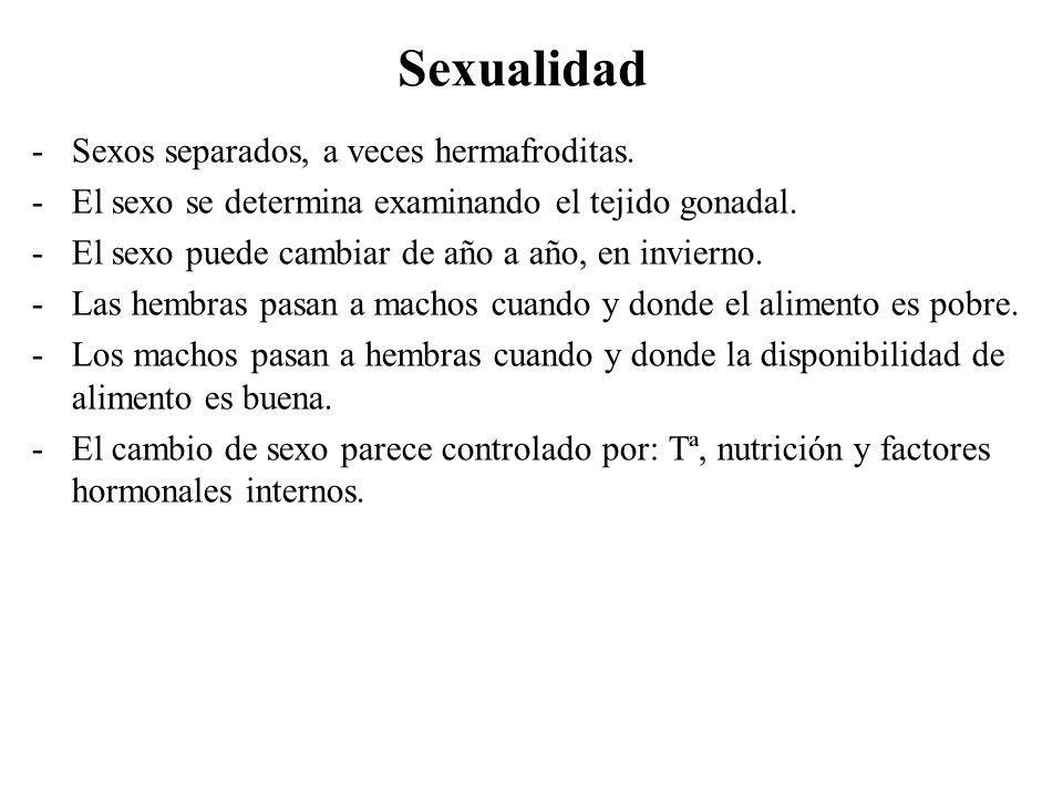 Sexualidad Sexos separados, a veces hermafroditas.