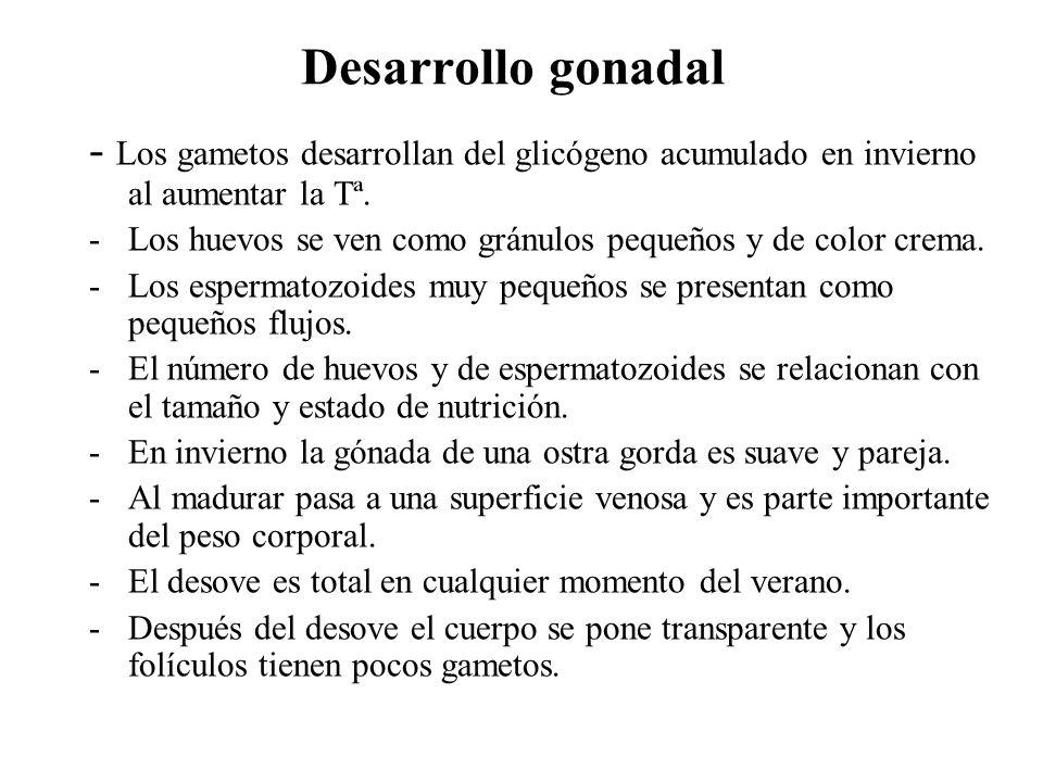 Desarrollo gonadal - Los gametos desarrollan del glicógeno acumulado en invierno al aumentar la Tª.