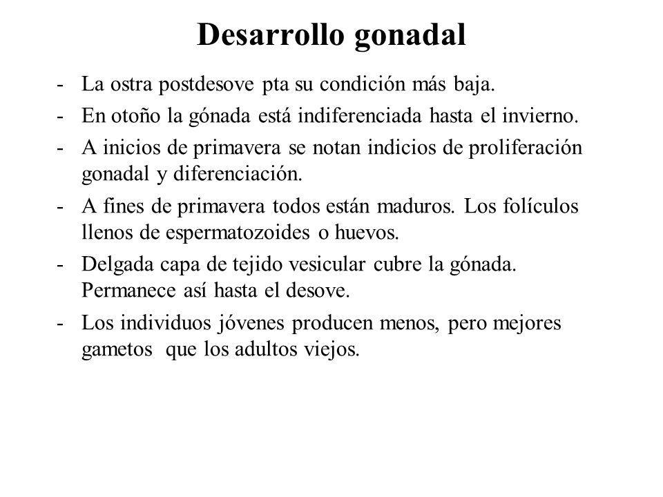 Desarrollo gonadal La ostra postdesove pta su condición más baja.