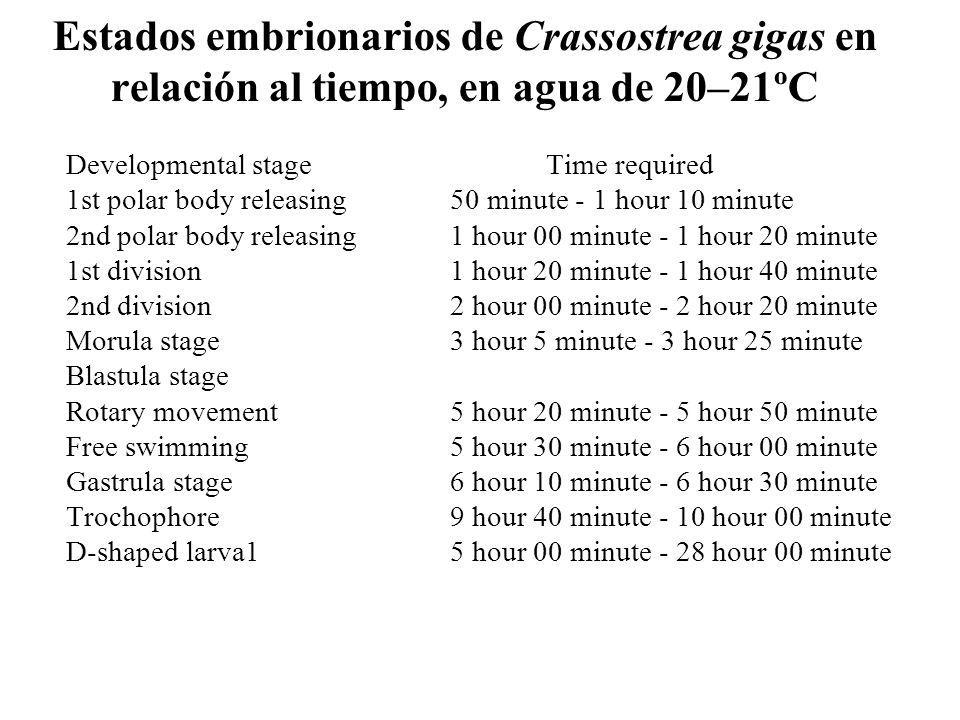 Estados embrionarios de Crassostrea gigas en relación al tiempo, en agua de 20–21ºC