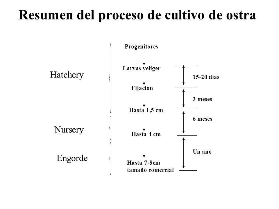 Resumen del proceso de cultivo de ostra