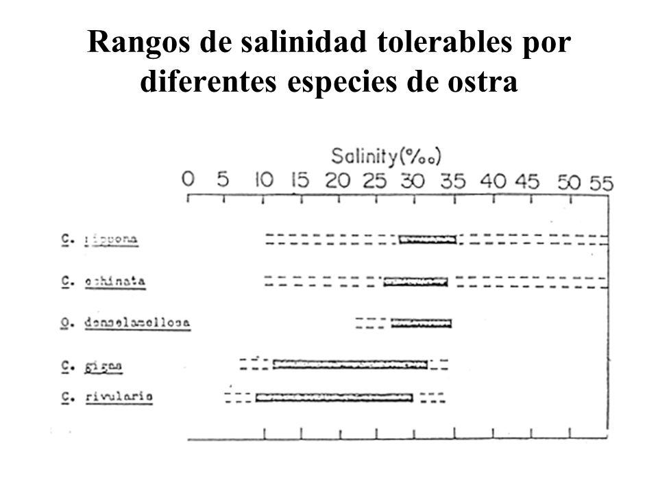 Rangos de salinidad tolerables por diferentes especies de ostra