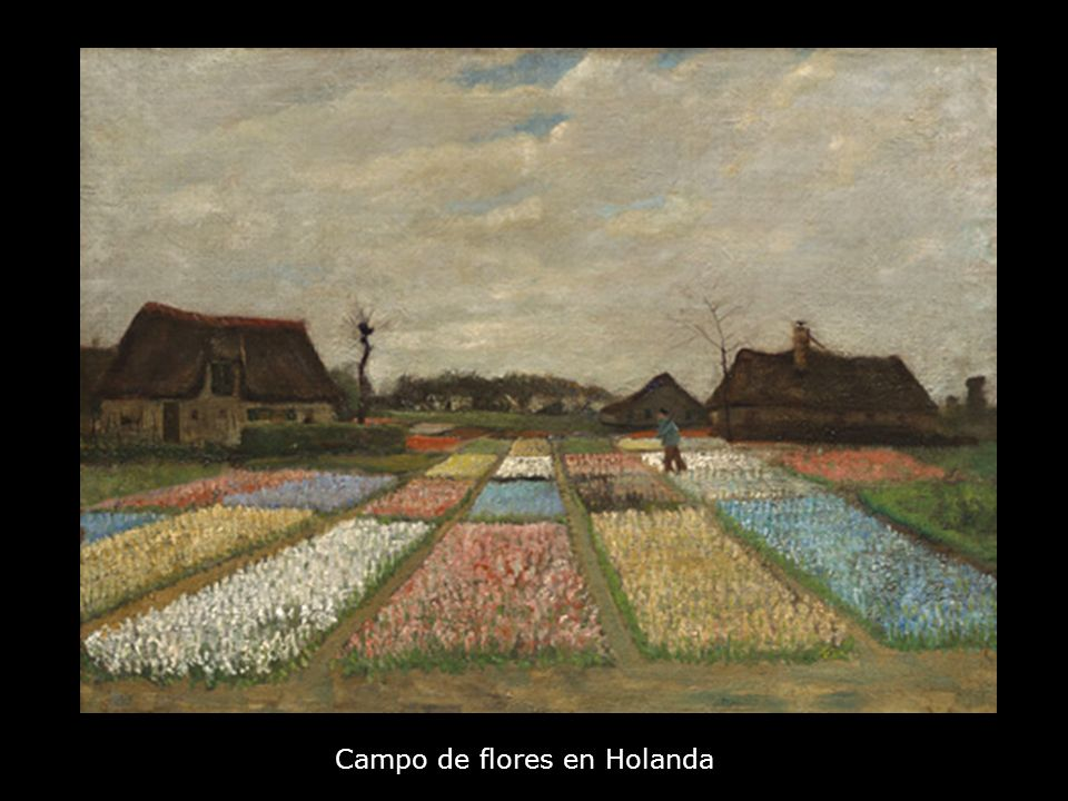Campo de flores en Holanda
