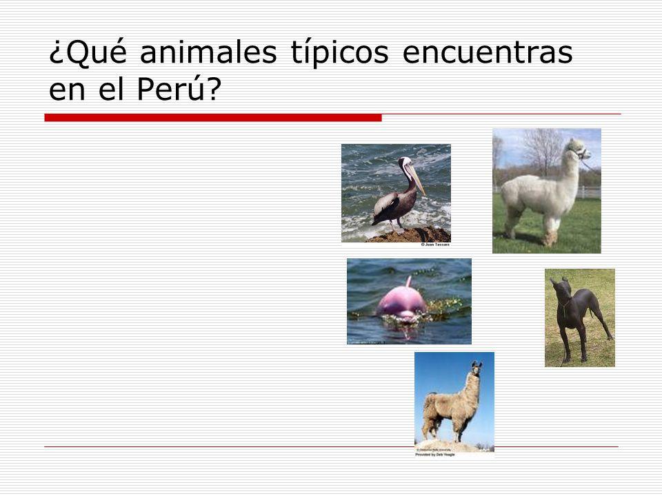 ¿Qué animales típicos encuentras en el Perú