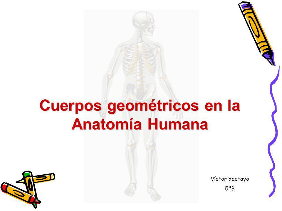 Cuerpos geométricos en la Anatomía Humana