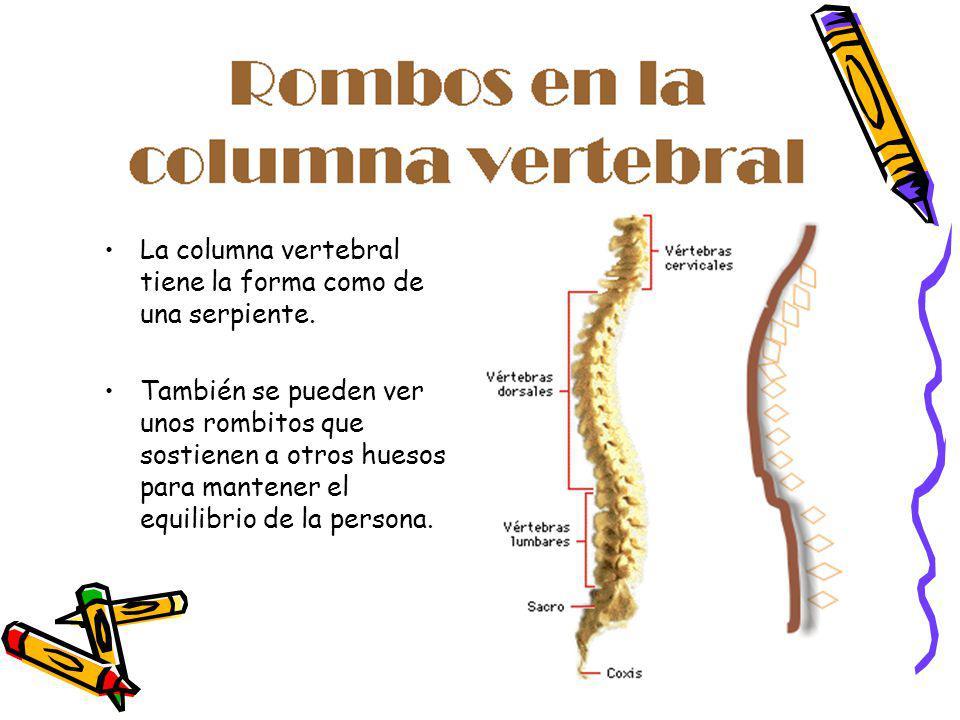 La columna vertebral tiene la forma como de una serpiente.