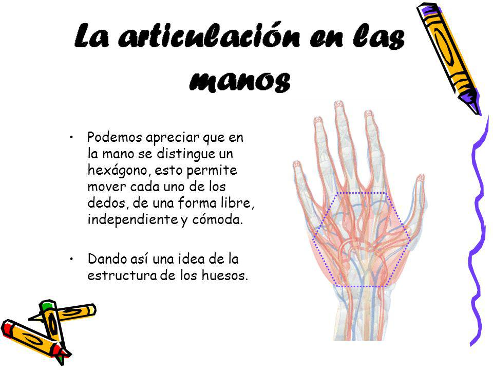 Podemos apreciar que en la mano se distingue un hexágono, esto permite mover cada uno de los dedos, de una forma libre, independiente y cómoda.