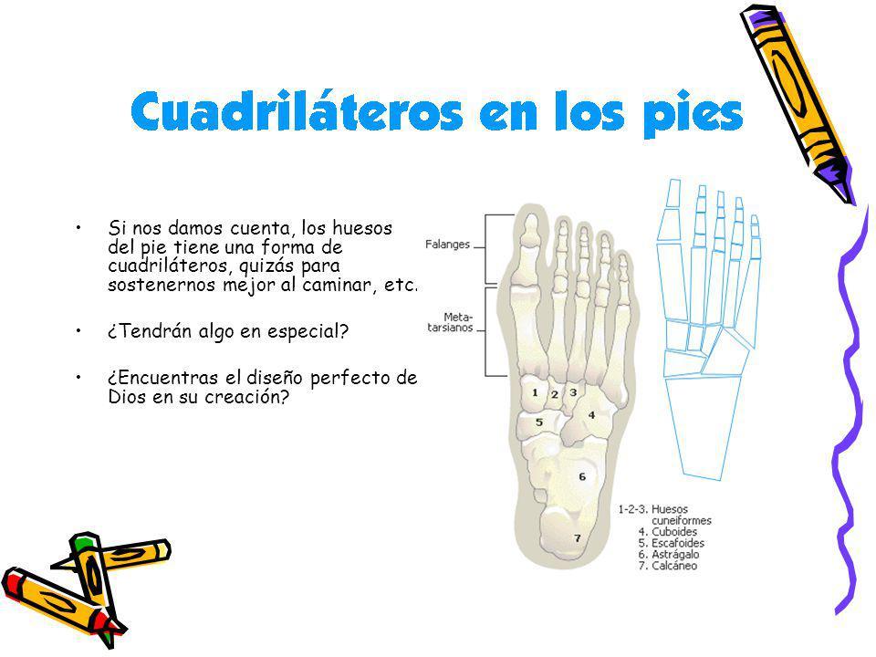Si nos damos cuenta, los huesos del pie tiene una forma de cuadriláteros, quizás para sostenernos mejor al caminar, etc.