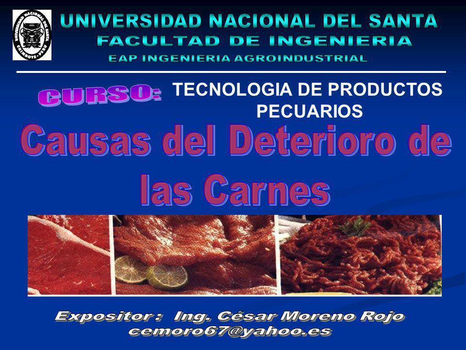 TECNOLOGIA DE PRODUCTOS