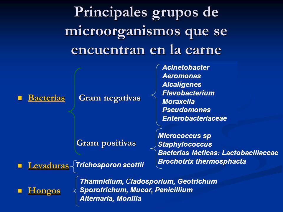 Principales grupos de microorganismos que se encuentran en la carne