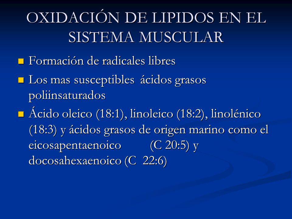 OXIDACIÓN DE LIPIDOS EN EL SISTEMA MUSCULAR