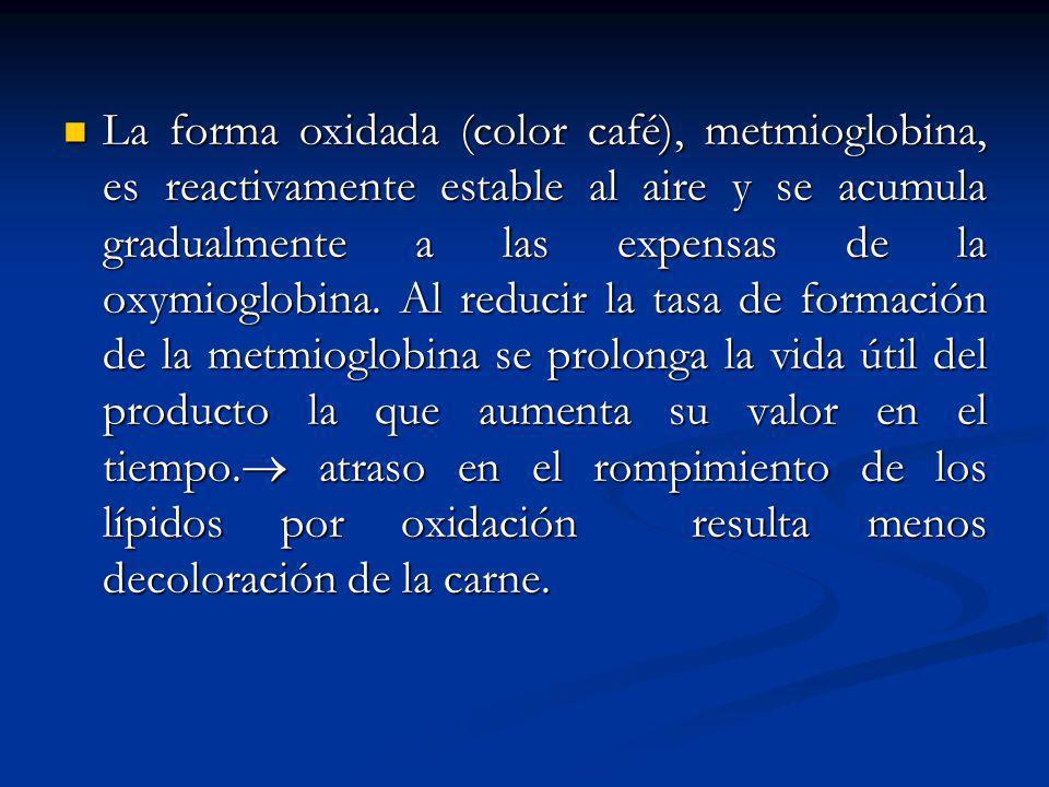 La forma oxidada (color café), metmioglobina, es reactivamente estable al aire y se acumula gradualmente a las expensas de la oxymioglobina.
