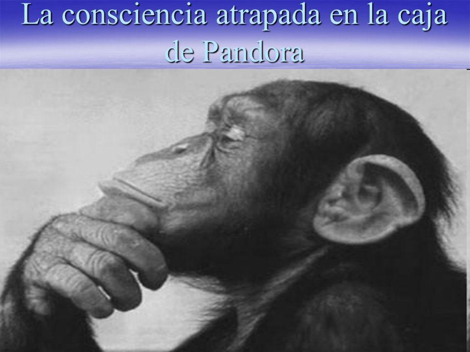 La consciencia atrapada en la caja de Pandora