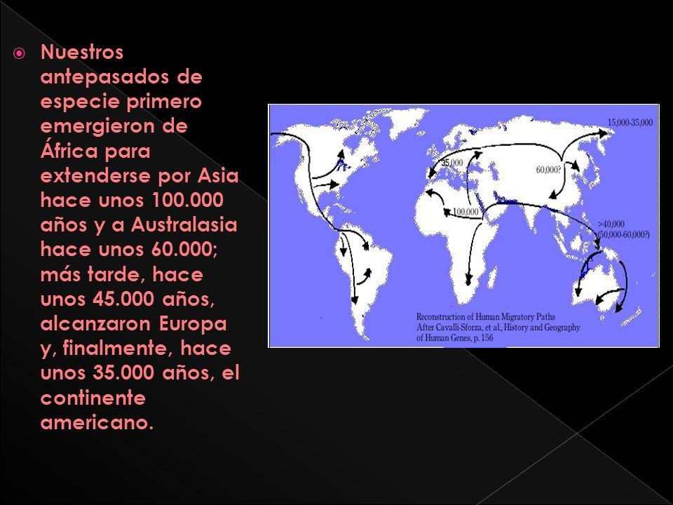 Nuestros antepasados de especie primero emergieron de África para extenderse por Asia hace unos 100.000 años y a Australasia hace unos 60.000; más tarde, hace unos 45.000 años, alcanzaron Europa y, finalmente, hace unos 35.000 años, el continente americano.