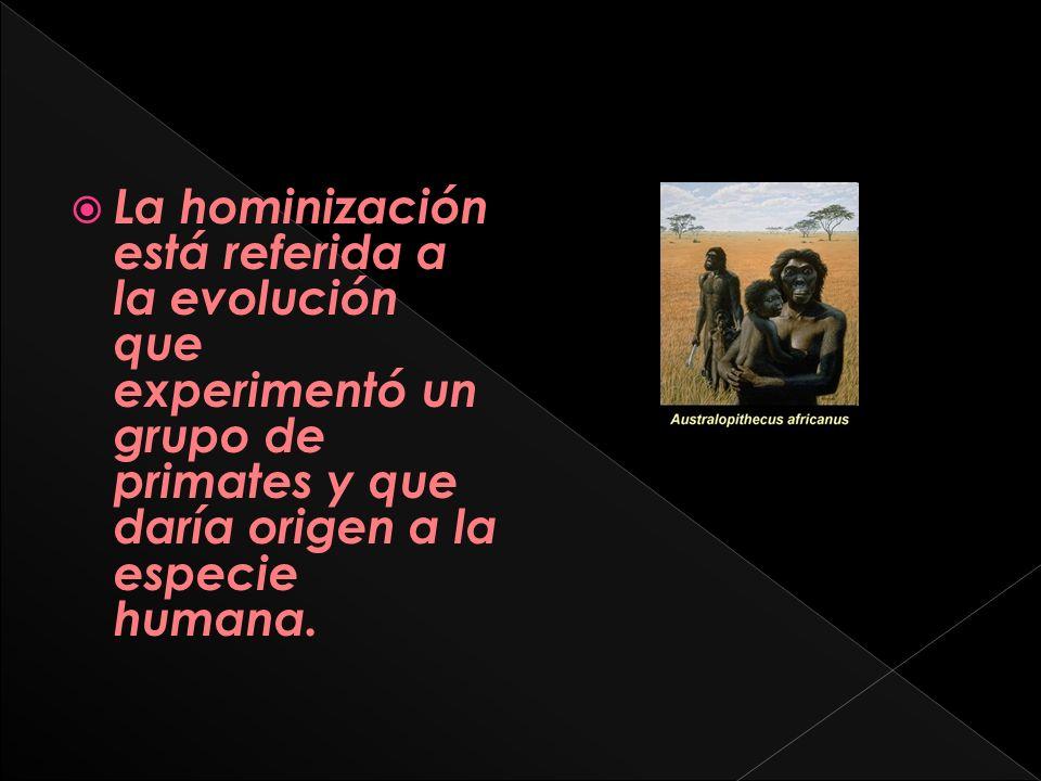 La hominización está referida a la evolución que experimentó un grupo de primates y que daría origen a la especie humana.
