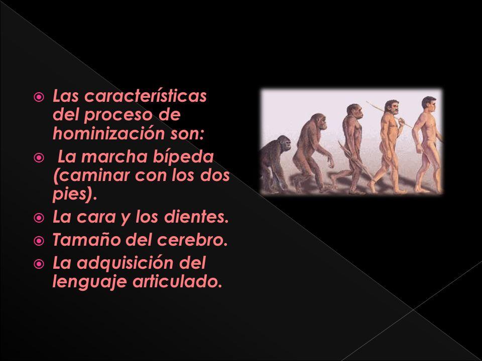 Las características del proceso de hominización son: