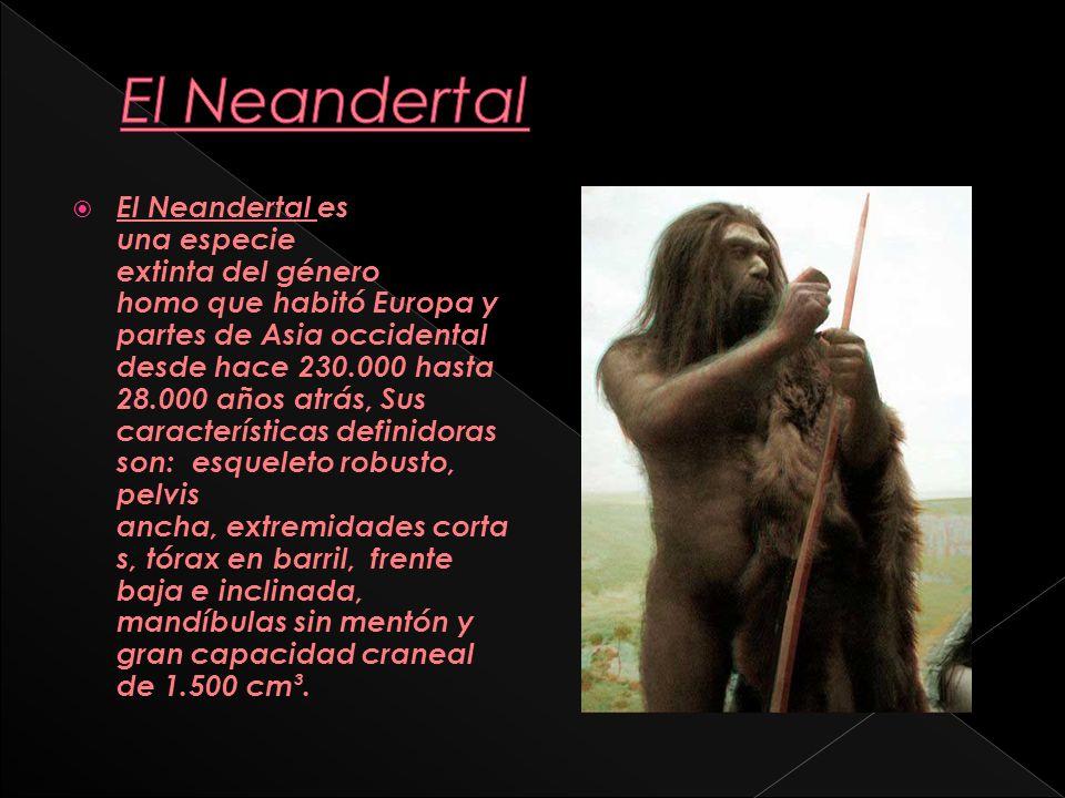 El Neandertal