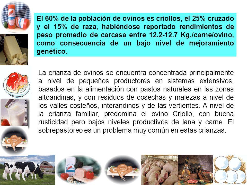 El 60% de la población de ovinos es criollos, el 25% cruzado y el 15% de raza, habiéndose reportado rendimientos de peso promedio de carcasa entre 12.2-12.7 Kg./carne/ovino, como consecuencia de un bajo nivel de mejoramiento genético.
