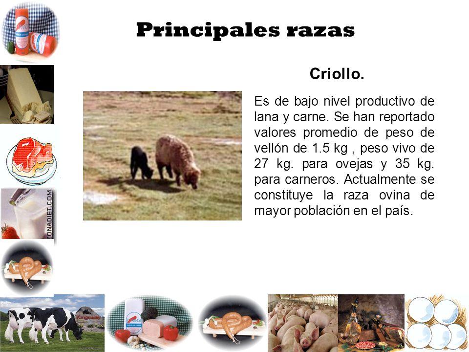 Principales razas Criollo.