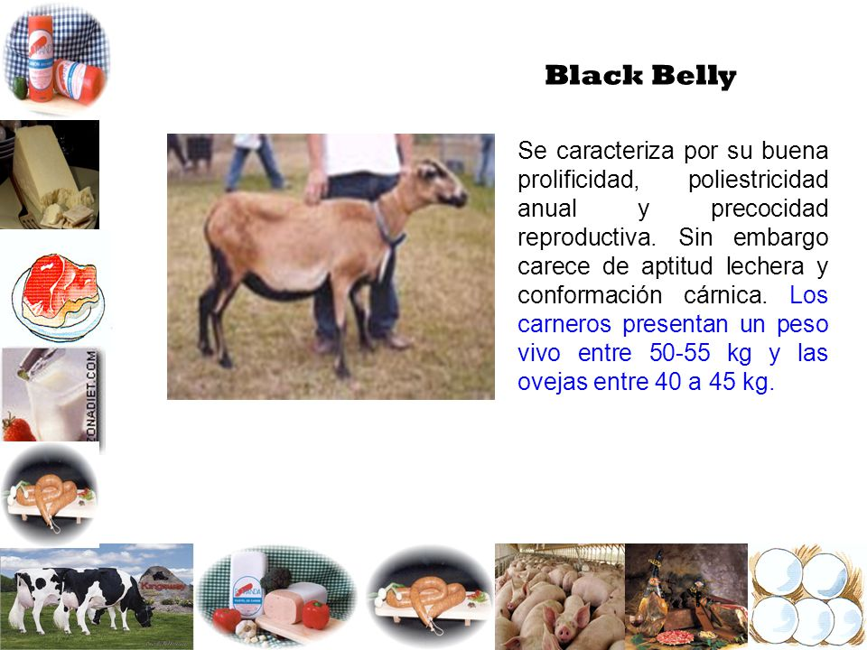 Black Belly